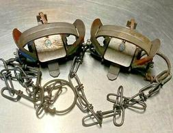 2 1 coil spring traps raccoon mink