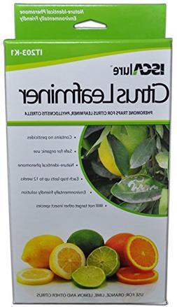 citrus leafminer traps 3