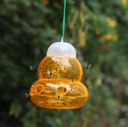 fly flies insects wasp hanging trap jackets
