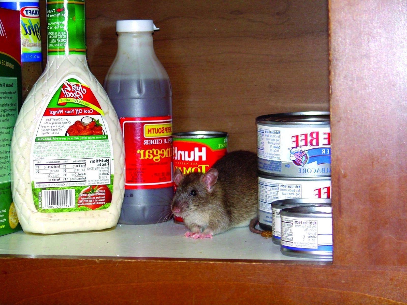 10 LARGE Sticky Rat Mice MOUSE w/ Bait No Rodent Pest