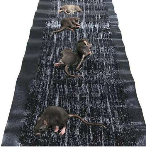 Large Rodent Glue Traps Rat Board Snake