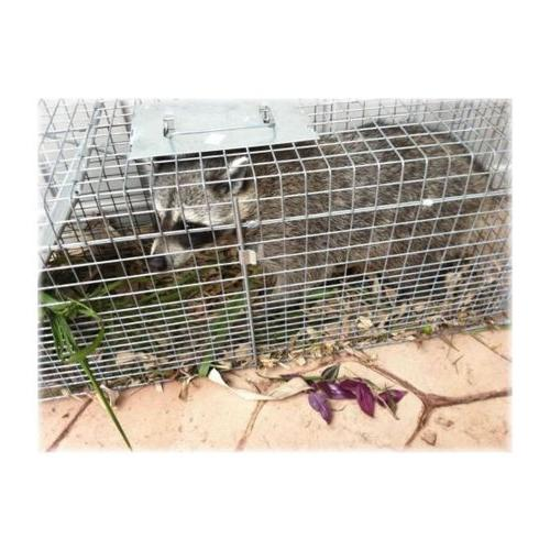 Havahart 1089 Live Cage for Stray Groundhog, Opossum,
