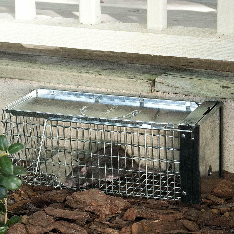 Havahart 0745 Trap Chipmunk, Rat,