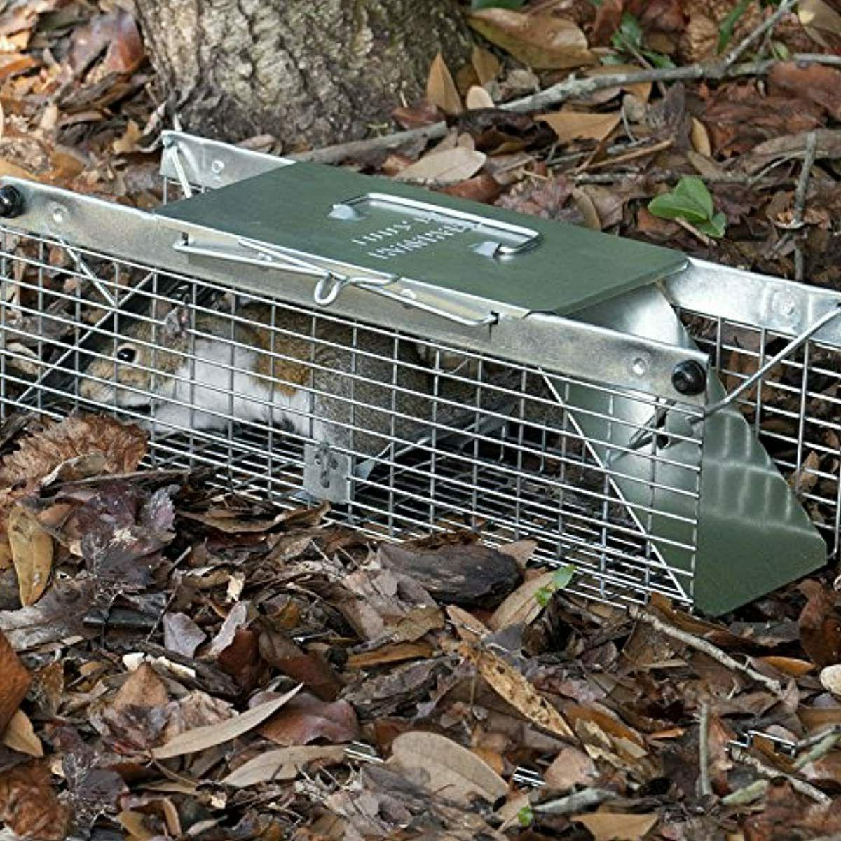 Havahart 1025 2-Door Ideal for catching squirrels,