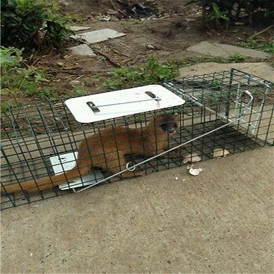 Humane Animal Control Opossum