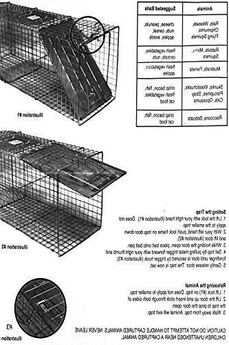 Sawan Trap Steel Live Rodent Control Skunk Rabbit