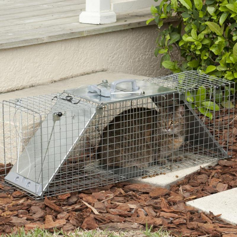 Large Live Cage for Opossum, and