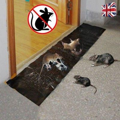 Large Mice Rodent Glue Super Rat Snake Bugs