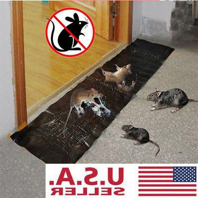 large size mice mouse rodent glue traps