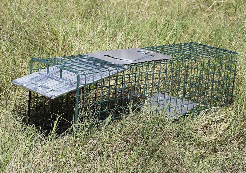 "Live Trap x 7"" 7"" Humane Catch Cage for Raccoon mice"