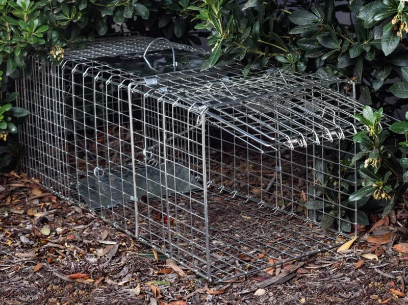 "Live Trap 32"" Humane Catch & Large Cage Rodent"