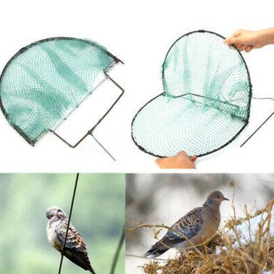 sparrow bird pigeon quail humane live catching