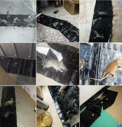 Rat Trap Snare Glue Snare Rodent Catcher Rat