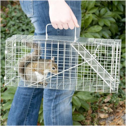 Havahart One-Door Animal Squirrel, and