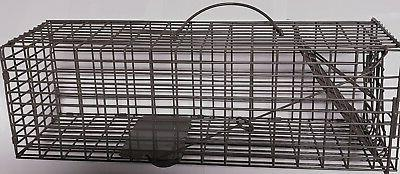 Cage Live Trapping Rat