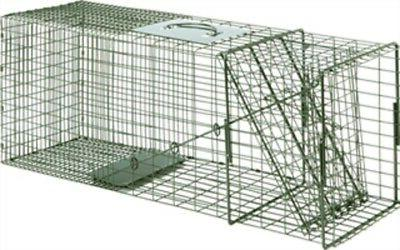 traps raccoon cage trap